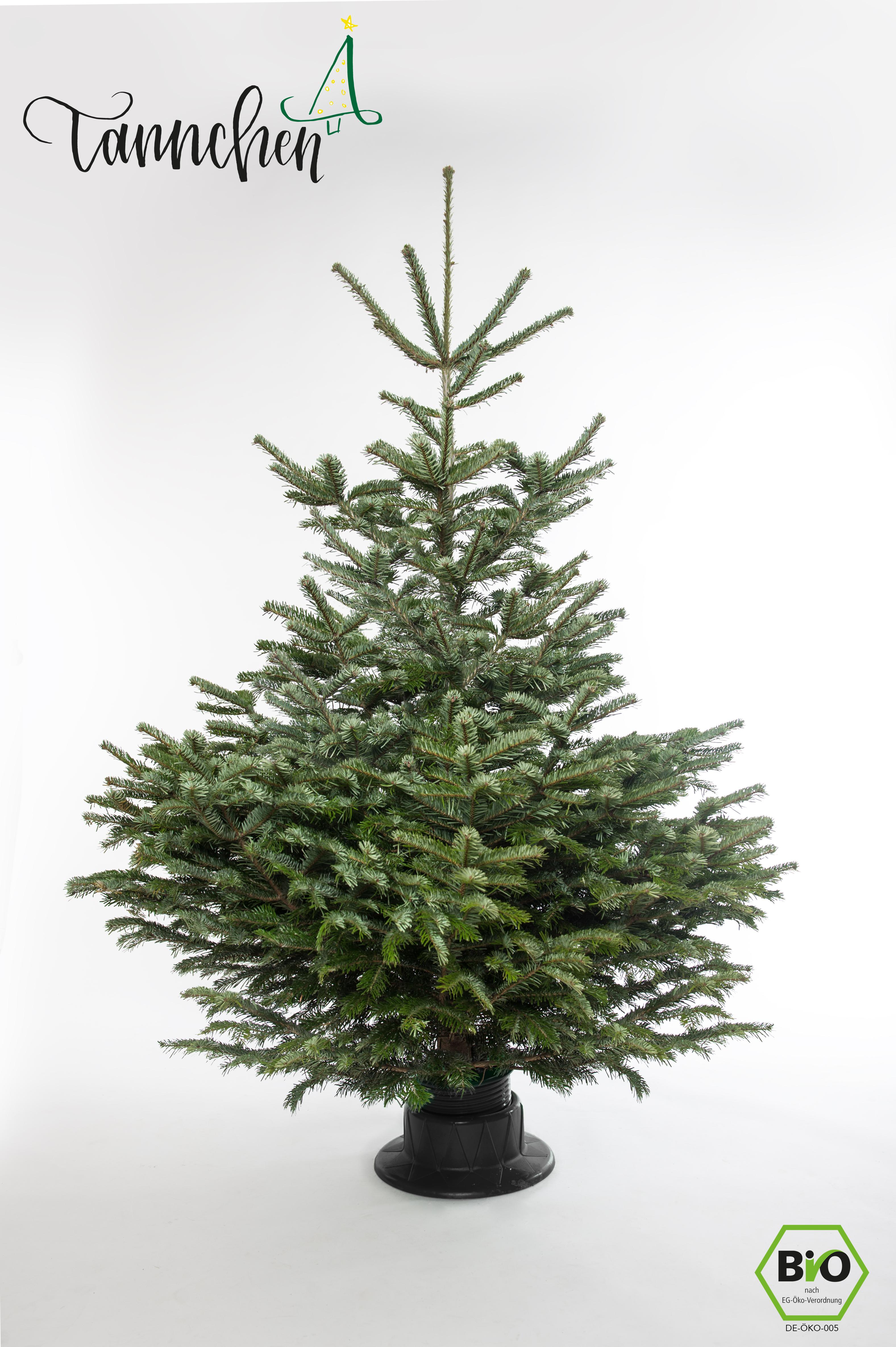 Bis Wann Bleibt Der Weihnachtsbaum Stehen.So Stellen Sie Ihren Weihnachtsbaum Auf Und Halten Ihn Frisch Das