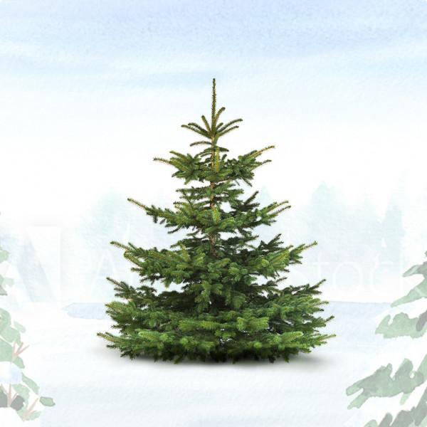 Bio-Weihnachtsbaum im Schnee